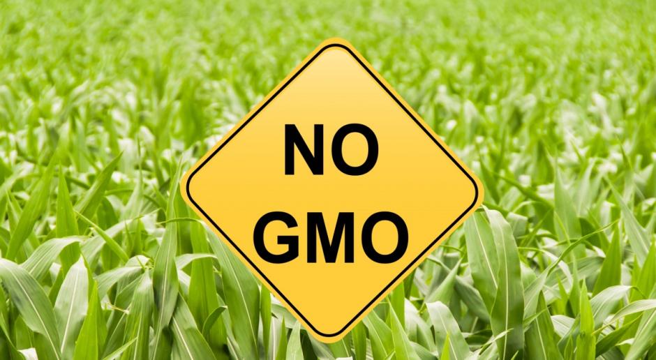 PSL: CETA furtką dla żywności GMO