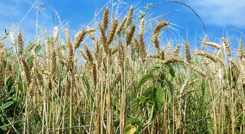 Pozycja rynków rolnych wzrośnie?