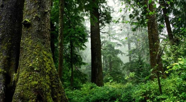 Podkarpackie: 5,7 mln zł na ochronę sadzonek drzew przed zwierzętami