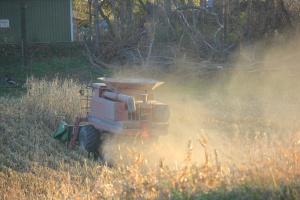 IGC: Światowa produkcja zbóż ogółem bez zmian