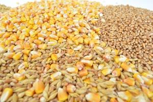 Giełdy krajowe: Ceny zbóż utrzymują się na zbliżonym poziomie