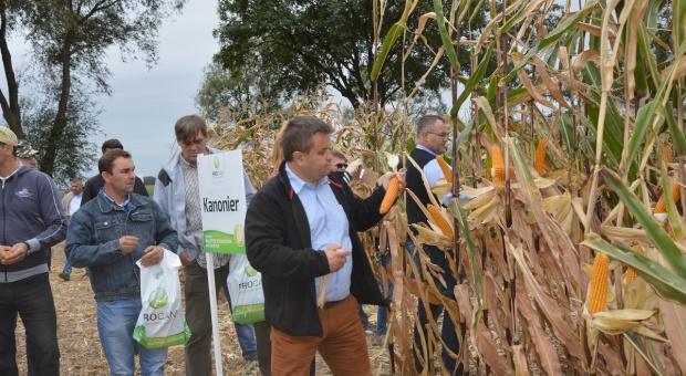 PROCAM – Centralne dni kukurydzy