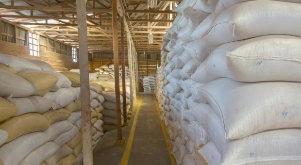 Kolejne 500 ton pszenicy sprzedane na Platformie Żywnościowej!