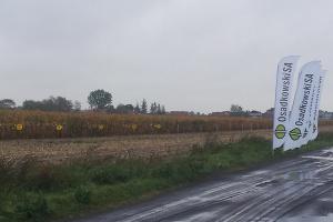 Poletka z odmianami kukurydzy na terenie gospodarstwa.fot. materiały prasowe