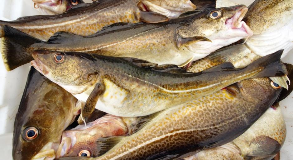 Kwoty połowowe dorszy zostaną w przyszłym roku zredukowane