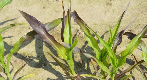 Uproszczenia w uprawie a dostępność składników pokarmowych