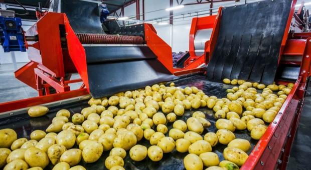 Ceny ziemniaków niskie, ale eksport je zwiększy