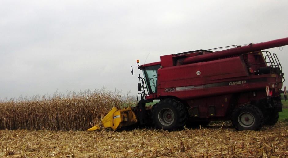 Deszczowa pogoda wstrzymuje zbiory kukurydzy