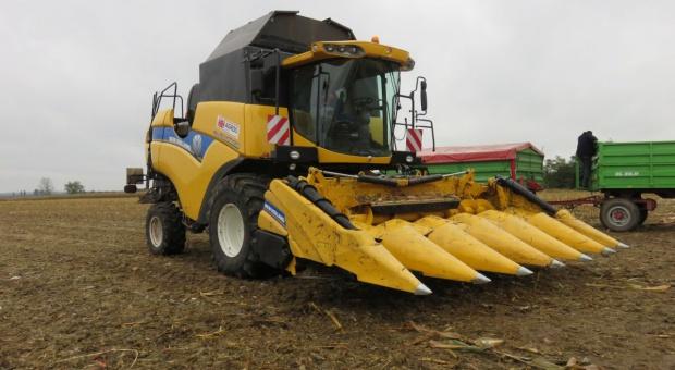 Nowa przystawka do zbioru kukurydzy na ziarno od New Holland