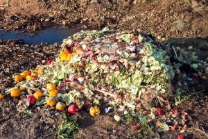 W UE wyrzuca się17 miliardów kg świeżych owoców i warzyw rocznie
