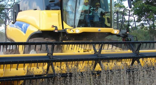 USDA: Wzrost prognozy światowej produkcji nasion oleistych