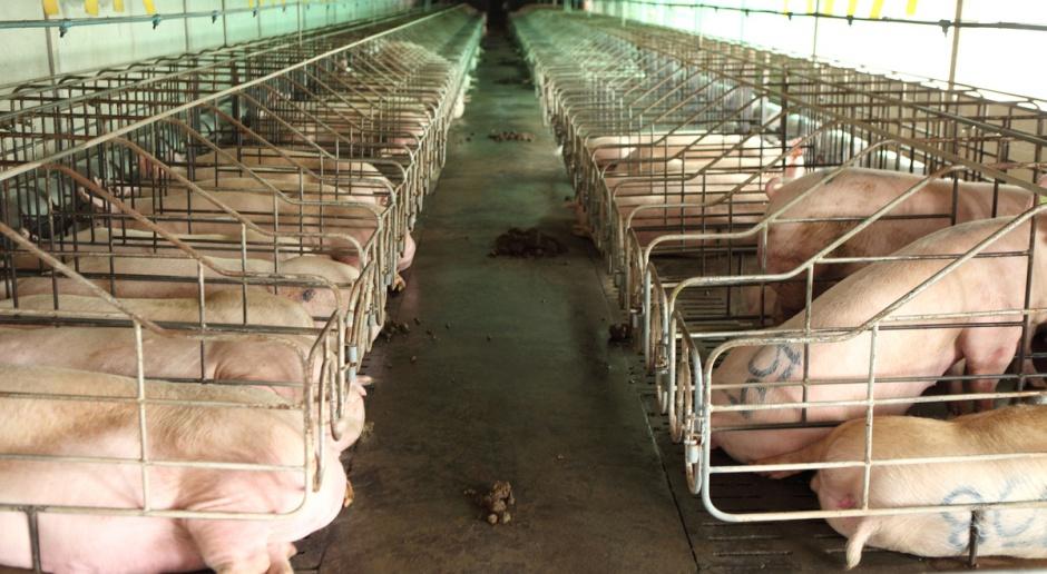 Mołdawia wprowadza blokadę na wieprzowinę z Ukrainy