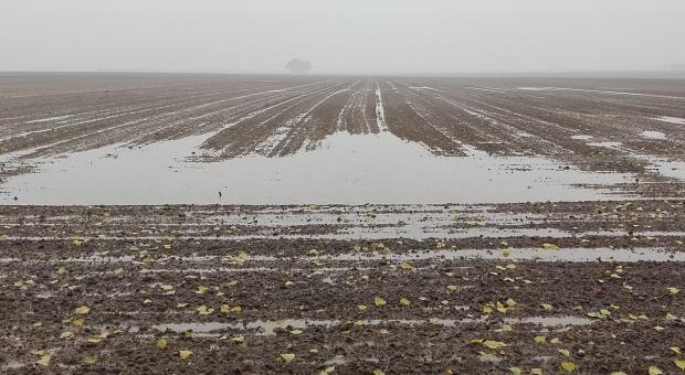 Zastoiska wody na polach