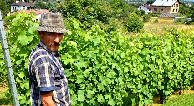 Czy polskie wino podbije świat? Pogoda pomaga w rozwoju branży