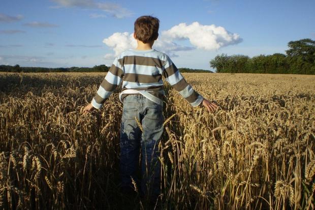 Dopłaty do materiału siewnego służą firmom nasiennym, a nie rolnikom?