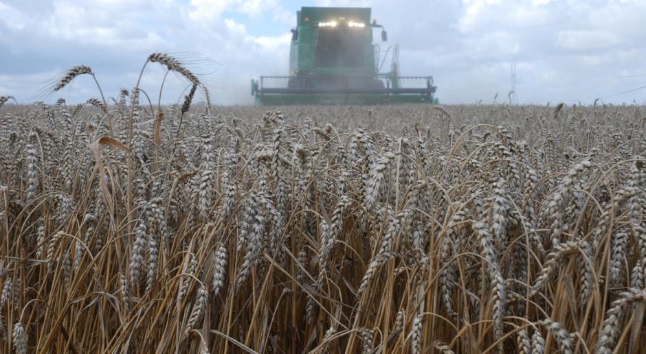 ASF będzie powodem wstrzymania importu zbóż z Ukrainy?