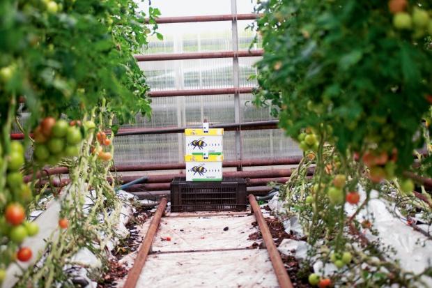 UE: Ponad 11 milionów hektarów uprawianych ekologicznie