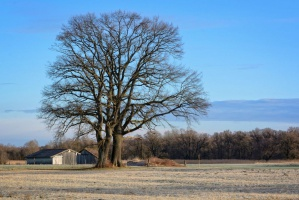 ANR na program Mieszkanie Plus może przekazać ok. 5,6 tys. ha ziemi