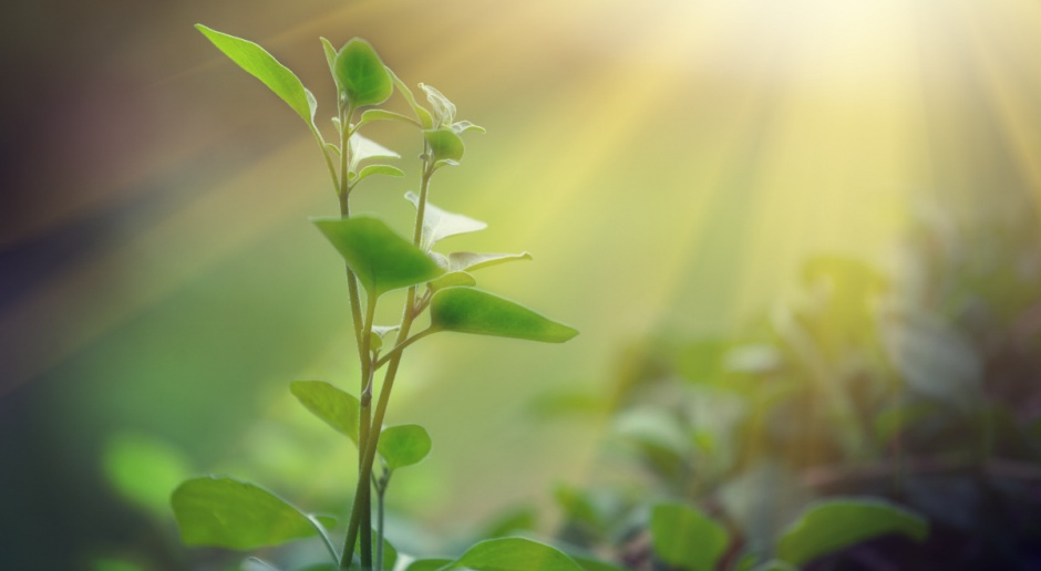 Sejm przyjął ustawy dotyczące ochrony zdrowia roślin