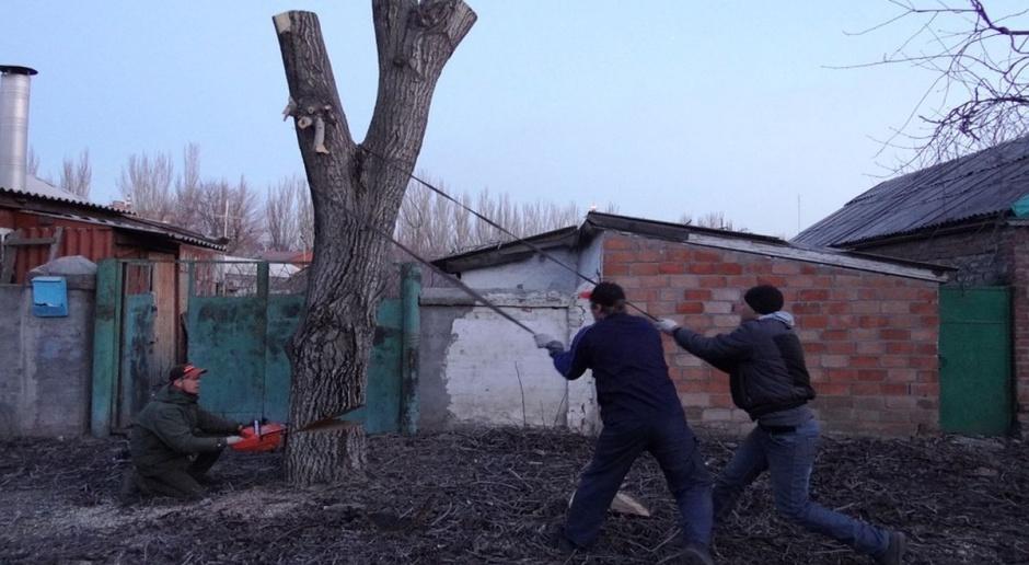 Łatwiej będzie wyciąć drzewo?