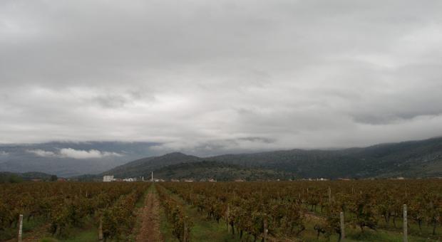 Z wizytą w czarnogórskiej winnicy