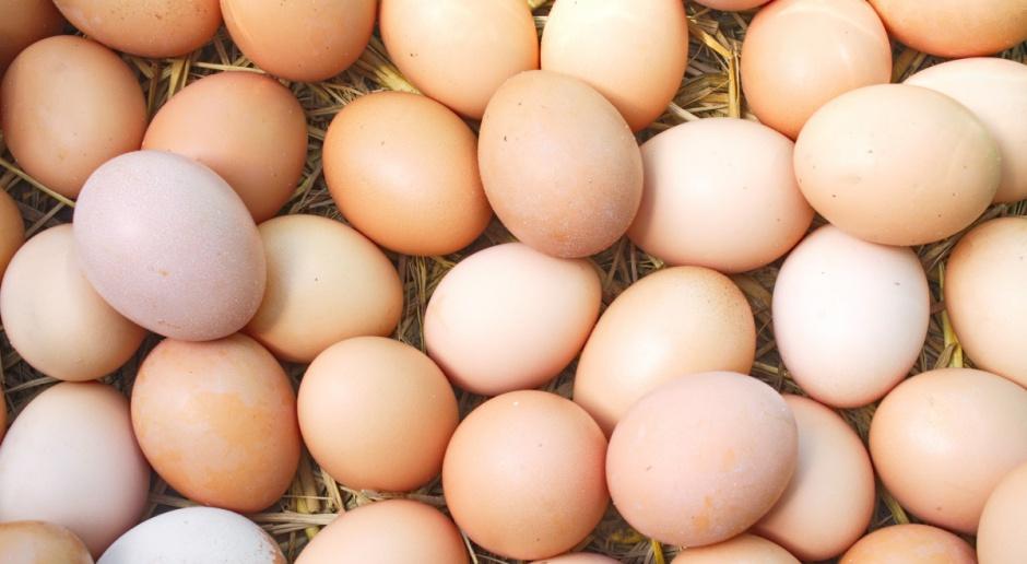 Fermy Drobiu Woźniak: Jaja wskazane przez GIS już wycofane ze sklepów DINO