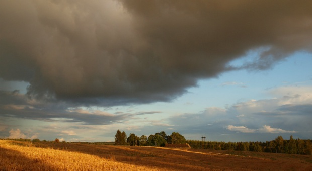 Polskie rolnictwo według OECD - jesteśmy ważnym producentem zbóż