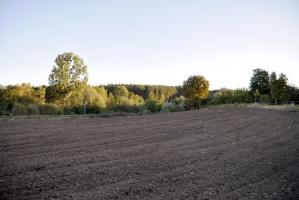 Sejm za nowelą ustawy o wspieraniu rozwoju obszarów wiejskich