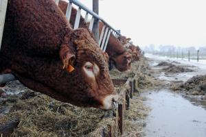 Rząd przyjął projekt noweli o organizacji hodowli i rozrodzie zwierząt gospodarskich
