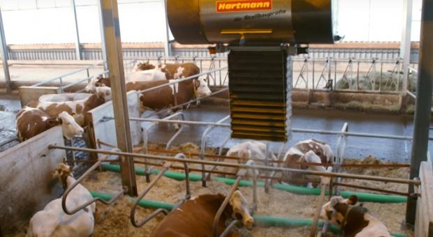 Automatyczny system ścielenia legowisk firmy Hartmann