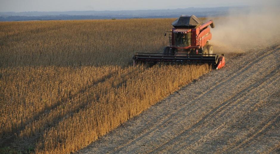 IGC: Prognoza rekordowej światowej produkcji soi