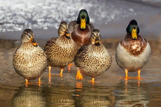 Jakie środki ostrożności z powodu ptasiej grypy?