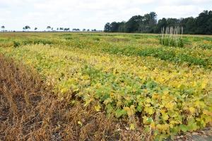 Perspektywy rozwoju uprawy soi