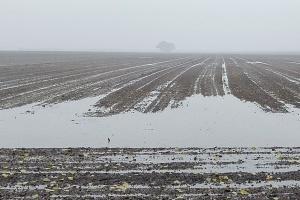 Groźne zastoiska wody – czy czekają nas podsiewy ozimin?