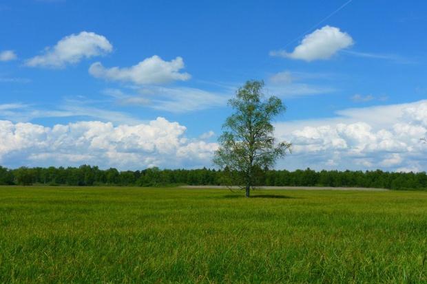 Rolnik bez zezwolenia wytnie drzewa na swojej nieruchomości