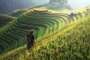 Chiny chcą podnieść wydajność, jakość i dochody w rolnictwie