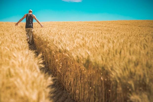 Zboże z Ukrainy przestanie zakłócać polski rynek?