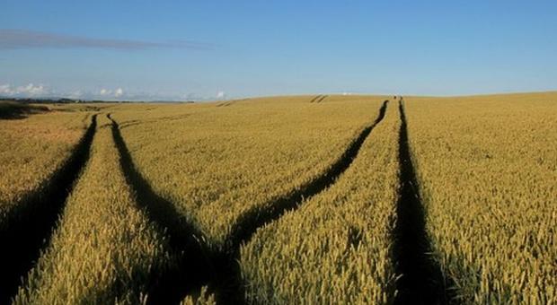 """""""Szara strefa"""" w obrocie nasionami przestanie być potrzebna?"""