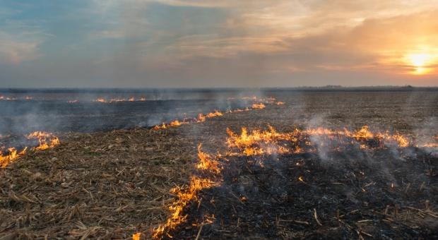 Argentyna: Płonie pampa