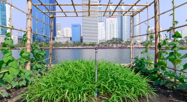 Czy rolnictwo przeniesie się do miast?
