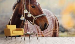 Fototapeta z koniem, czyli tradycyjne wnętrze w nowej odsłonie.