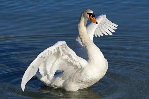 Trwa walka z ptasią grypą H5N8