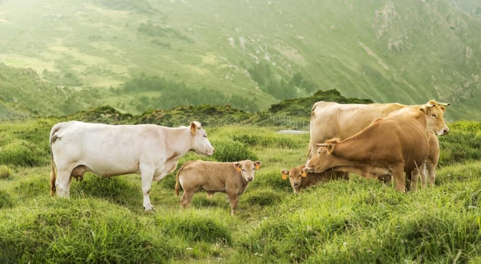 Na hiszpański rynek trafiło mleko... feministek