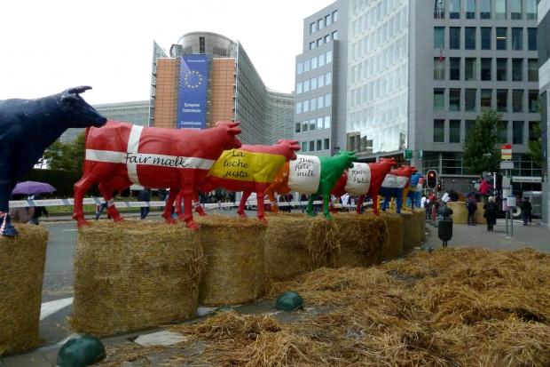 Europejscy producenci mleka szykują się na manifestację w Brukseli