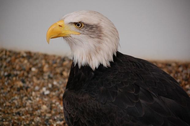 Europa kontynuuję walkę z ptasią grypą