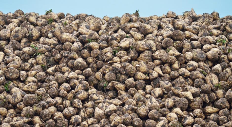 KSC skupiła ponad 5 mln ton buraków