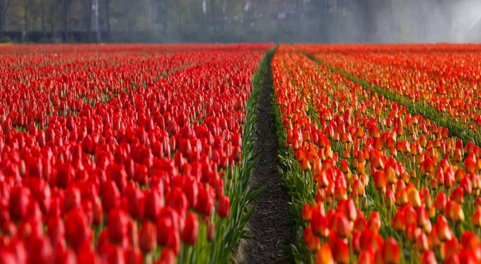 Holandia drugim światowym eksporterem produktów rolnych