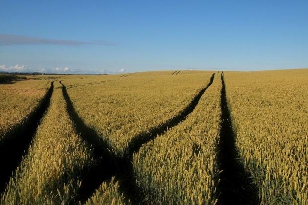 Groźny import zbóż z Ukrainy, czy nadprodukcja i brak zorganizowania polskich rolników?