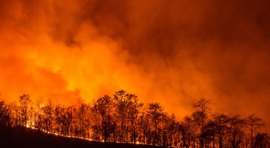 W Hiszpanii płoną lasy i tereny rolne w kilku regionach kraju