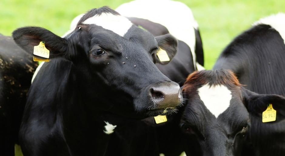 Portugalia oznaczy mleko jako portugalskie
